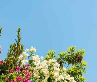 Zyperns Flora